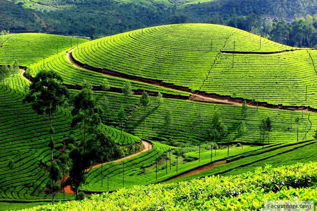 Bangalore to Ooty  | GetMyCabs +91 9008644559 | bangalore to ooty,  - GLK1500