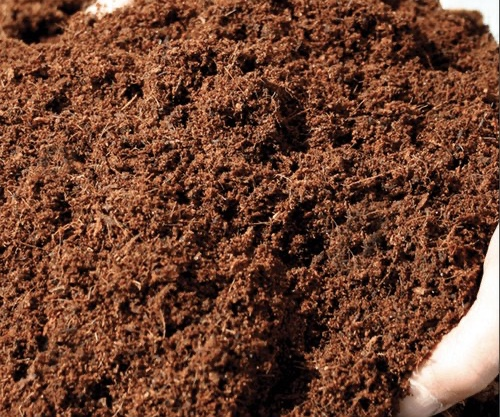 COCO PEAT NURSERY  NEAR ME    EMPHASIS LANDSCAPE & DESIGN   COCOPEAT IN YELAHANKA, MANURE SUPPLIERS IN YELAHANKA ,GARDEN TOOLS IN YELAHANKA ,ORGANIC MANURE NEAR ME ,COCO PEAT IN YELAHANKA ,VERTICAL GARDEN SERVICES IN YELAHANKA ,PLANTS SUPPLIERS IN YELAHANKA - GL101528
