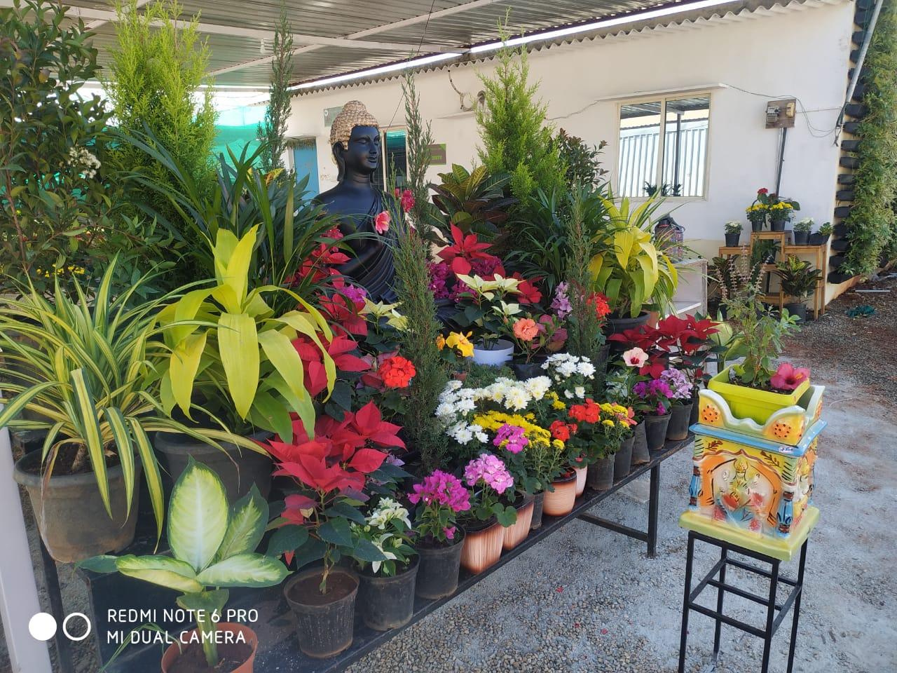 FLOWERING PLANTS IN YELAHANKA  | EMPHASIS LANDSCAPE & DESIGN | POT WHOLESALER, PLANT NURSERY NEAR ME ,FLOWERING POT WHOLESALER IN BANGALORE, PLASTIC POT WHOLESALER, FLOWERING PLANTS WHOLESALERS IN BANGALORE ,FLOWERING PLANTS WHOLESALERS IN YELAHANKA - GL101475