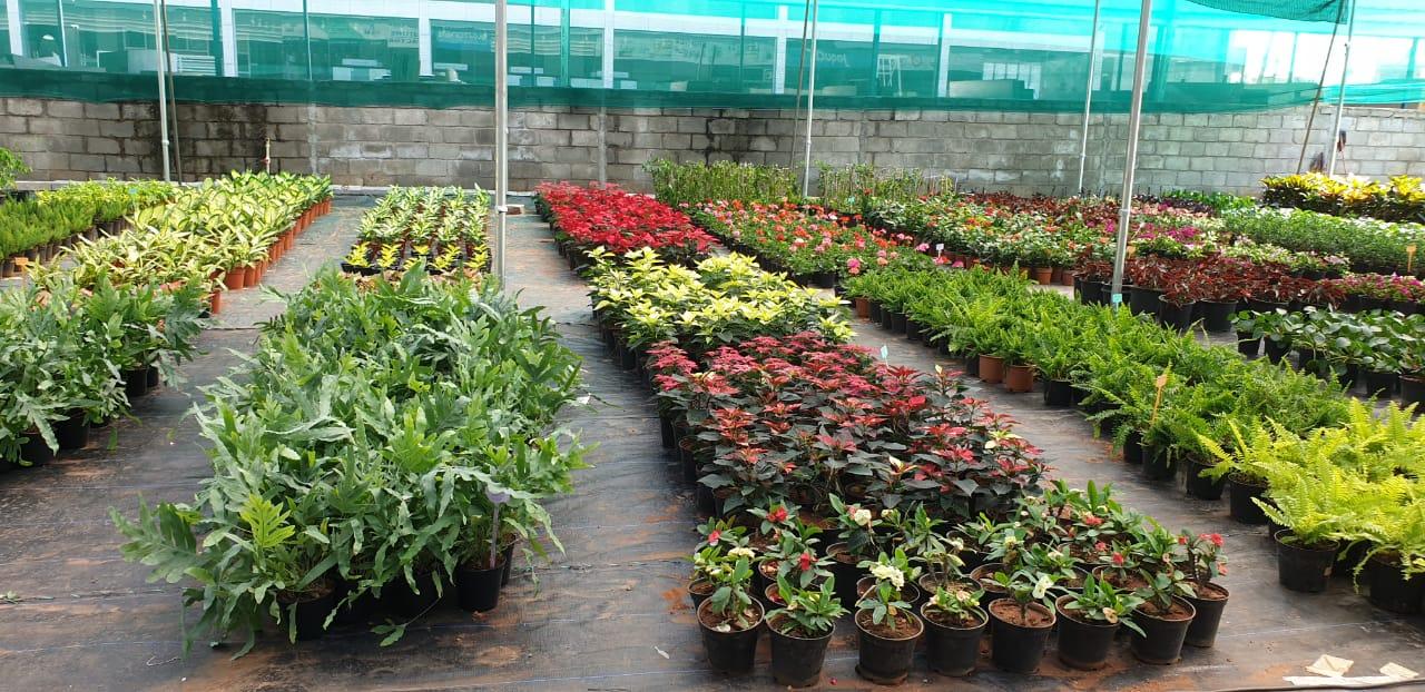 FLOWERING PLANTS IN YELAHANKA  | EMPHASIS LANDSCAPE & DESIGN | FLOWERING POTS IN YELAHANKA ,IRIS PLANTER STANDS ,PLANT NURSERY IN YELAHANKA ,GARDEN PLANTS - GL101516