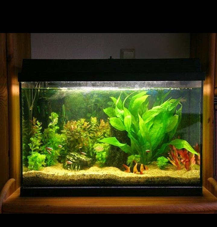 Aquariums Delar In Chandigarh Deepak Fish Aquarium Shop Wholesale Price Aquarium Fish 22d In