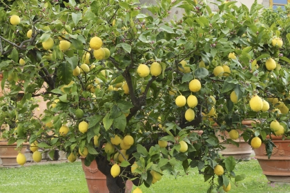SIRI HORTICULTURAL SERVICES, Orchard services in Hyderabad, Orchard services in Vanasthalipuram, Orchard services in Secunderabad , Orchard services Lb nagar, Orchard services Dilsuknagar.