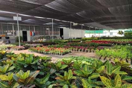EMPHASIS LANDSCAPE & DESIGN, FLOWERING POTS IN YELAHANKA ,IRIS PLANTER STANDS ,PLANT NURSERY IN YELAHANKA ,GARDEN PLANTS