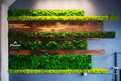 EMPHASIS LANDSCAPE & DESIGN, GARDEN  DESIGNERS   # SUSTAINABLE GREEN WALLS   # ASSOCIATES FOR ELT INDIA IN KARNATAKA   #  VERTICAL GARDEN  # MOSS WALL  # LIVE WALL  # GREENWALL  # PLANTS WALL  # PLANTS NURSERY  # WHOLESALE POTS