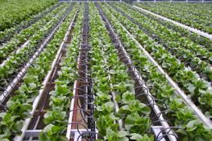 SIRI HORTICULTURAL SERVICES, Drip irrigation systems in Hyderabad, Drip irrigation systems Vanasthalipuram, Drip irrigation systems in Telangana,Drip irrigation systems in secunderabad