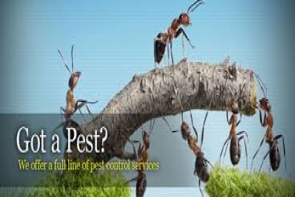 DOCTOR PEST SOLUTIONS, PEST CONTROL IN CHANDIGARH,ECONOMICAL PEST CONTROL IN CHANDIGARH,BEST PEST CONTROL IN CHANDIGARH,FAMOUS PEST CONTROL COMPANY IN CHANDIGARH
