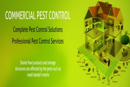 DOCTOR PEST SOLUTIONS, OFFICE PEST CONTROL IN CHANDIGARH, RESIDENTIAL PEST CONTROL IN CHANDIGARH, TOP PEST CONTROL COMPANY IN CHANDIGARH,PEST CONTROL IN CHANDIGARH