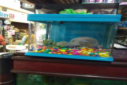Aquarium shop 22 D Chandigarh  9915332799