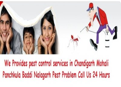 DOCTOR PEST SOLUTIONS